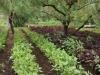 Singh Farm