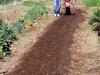 Tilling Compost