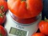Big Tomato!